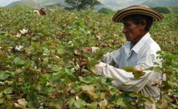 Agricultura Colombia